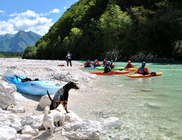 dog watching kayakers on soča river near boka waterfall